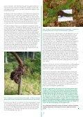 Douglasie – Chancen und Risiken Forstliche ... - Waldwissen.net - Seite 3