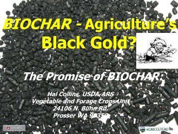 BIOCHAR - Agriculture's Black Gold? - Washington State University