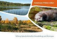 Gemeinsam Wildnis stiften - Stiftung Naturlandschaften Brandenburg