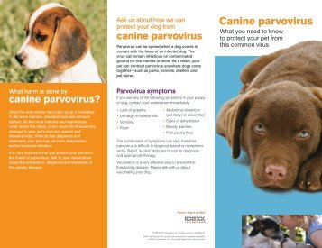 an analysis of the topic of canine parvovirus Canine parvovirus (cpv) is a highly contagious and relatively common cause of acute, infectious gi illness in young dogs although its exact origin is unknown, it is believed to have arisen from feline panleukopenia virus or a related parvovirus of nondomestic animals.