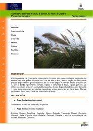 Cortaderia selloana (Schult. & Schult. f.) Asch ... - Interreg Bionatura