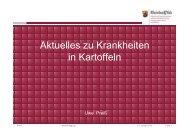 Aktuelle Krankheiten in Kartoffeln_Part DickeyaStolbur und Co [V5 ...