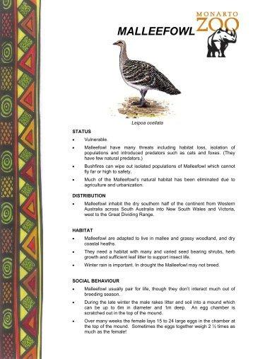 MALLEEFOWL - Zoos South Australia