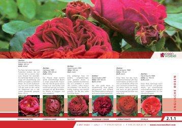 2 Englische Rosen.indd - Rosen Waibel