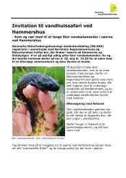 Invitation til vandhulssafari ved Hammershus - Danmarks ...