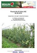 GOLDEN PARSI DA ROSA® - KIKU - Page 4