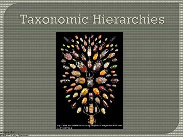 Taxonomic Hierarchies