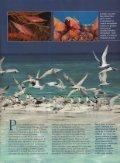 F- = -^1 - Atlantis Beach Resorts - Page 3