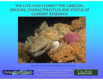 the live-fish fishery for cabezon: origins, characteristics and status of ...