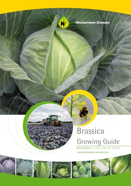Brassica Growing Guide Nickerson Zwaan
