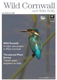 Wild Penwith A major new project in West - Cornwall Wildlife Trust