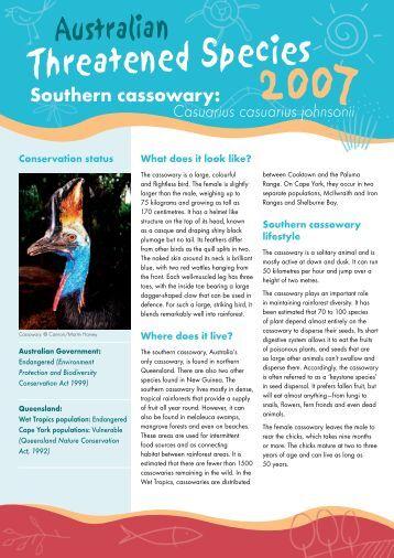 Southern cassowary - wwf - Australia