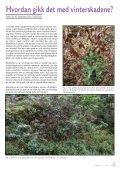 Utgave nr 3 - Den norske Rhododendronforening - Page 5