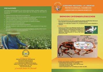 Hongos Entomopatógenos - Chavimochic