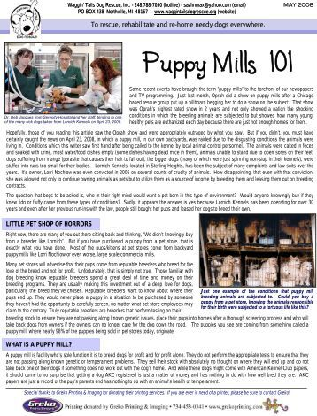 puppy mills speech outline Persuasive speech example -the  (if you decide you want to use the pattern yourself you'll find a downloadable fill-in-the-blanks outline template in pdf.