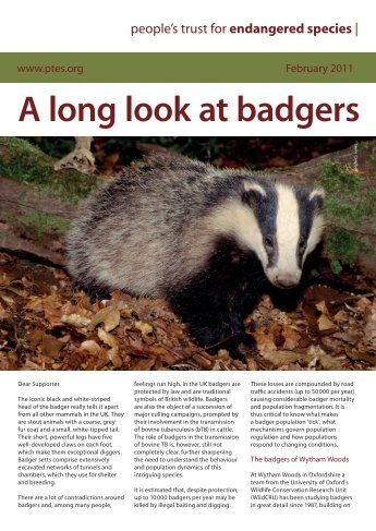 A long look at badgers - People's Trust for Endangered Species
