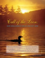 Call of the Loon - New Hampshire Fish and Game Department