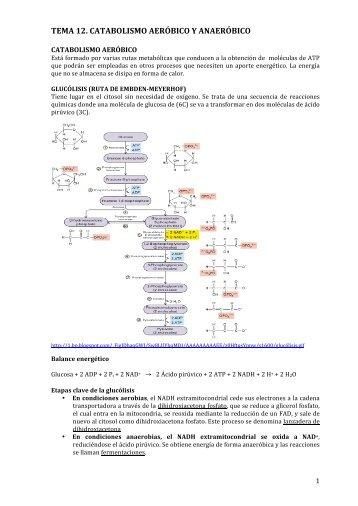 TEMA 12. CATABOLISMO