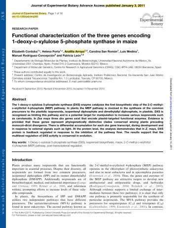 Functional characterization of the three genes encoding 1-deoxy-D ...