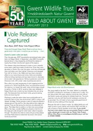 Wild About Gwent January 2013.pdf - Gwent Wildlife Trust