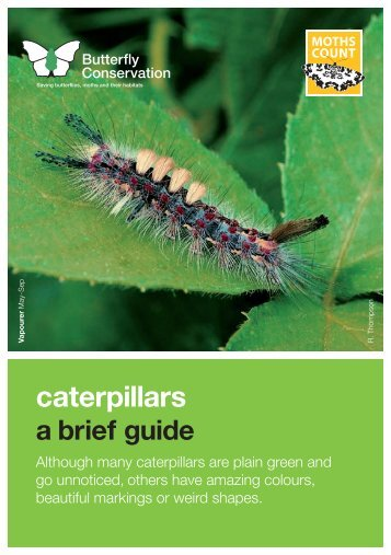 caterpillar lft