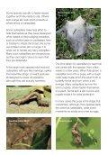 caterpillar lft - Page 3