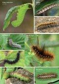 caterpillar lft - Page 5