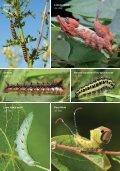 caterpillar lft - Page 6