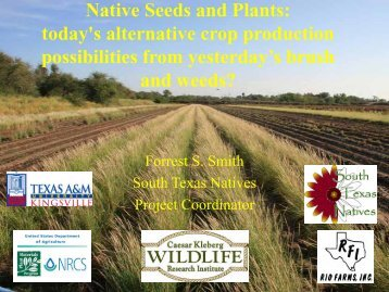 Native Seeds and Plants: today's alternative crop production ...