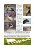Internet Warzenenten.pub - Enten-sv.de - Seite 2