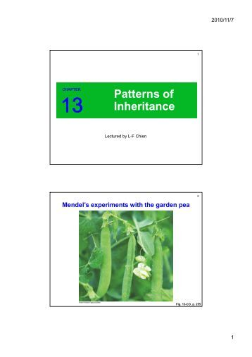 Printables Patterns Of Inheritance Worksheet b 4 7 genetics worksheet inheritance patterns of inheritance