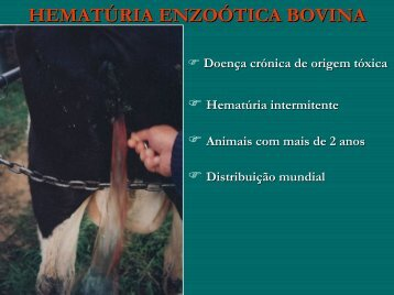 Hematúria enzoótica bovina (cores)