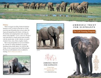 AMBOSELI TRUST FOR ELEPHANTS The Calf Naming Program