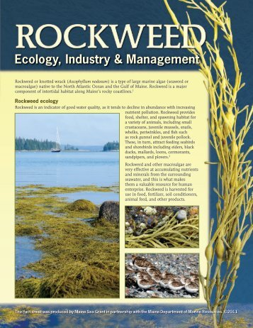 Rockweed Ecology, Industry, and Management ... - Maine Sea Grant
