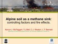 Alpine soil as a methane sink: