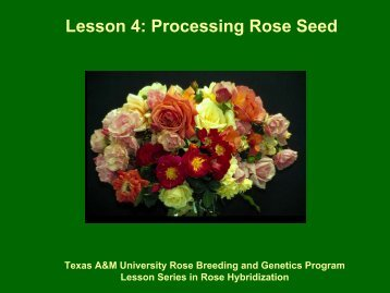 Processing Rose Seed - Aggie Horticulture - Texas A&M University