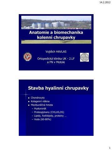 Anatomie a biomechanika kolenní chrupavky (PDF - 1.25 MB) - SSTA
