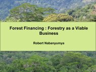 Forest Financing : Forestry as a Viable Business - NFP Facility