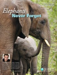 Elephants Never Forget Teaching Guide and - Time for Kids