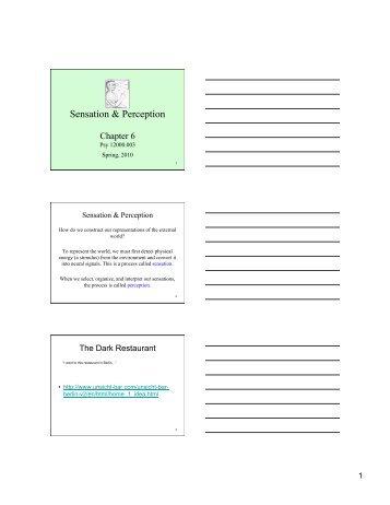 Sensation And Perception Worksheet Worksheets