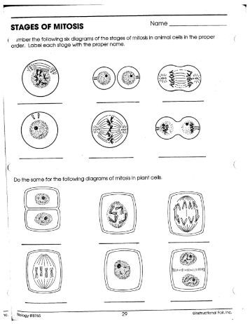 mitosis worksheet and diagram identification answer key calleveryonedaveday. Black Bedroom Furniture Sets. Home Design Ideas