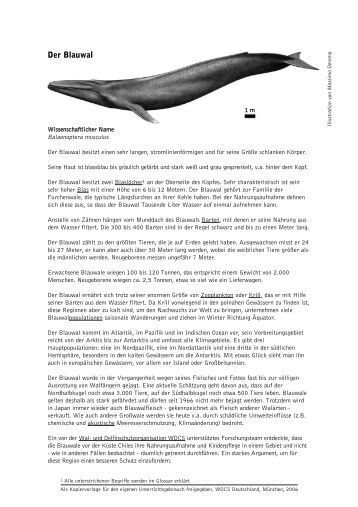Der Blauwal - Whale and Dolphin Conservation Society
