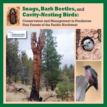 Snags, Bark Beetles, and Cavity-Nesting Birds: - American Bird ...