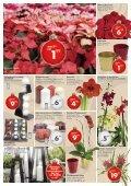 Besinnliche Stimmung zum besten Preis! - Bellaflora - Seite 3