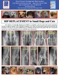 Total Hip Replacement in Small Dogs and Cats - Gulf Coast ...