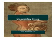 Integumentary System - Sinoe medical homepage.