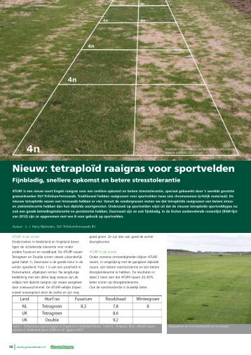 Nieuw: tetraploļd raaigras voor sportvelden - DLF-TRIFOLIUM Group