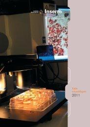 Rapport d'activité 2011 : faits scientifiques - Inserm