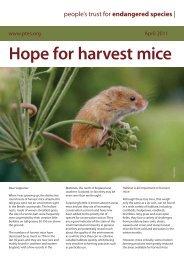harvest mice April 2011 - People's Trust for Endangered Species
