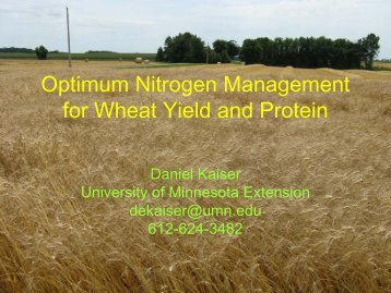 Optimum Nitrogen Management for Wheat Yield and Protein